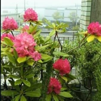 ウオーキング道の花