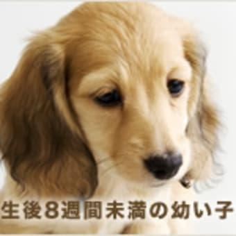 【残酷な画像はありません】 緊急告知★毛皮反対デモ行進 神戸 三ノ宮 2012年