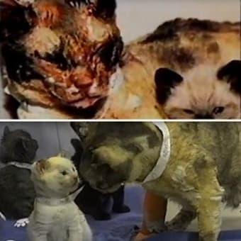 炎の中に5回も飛び込み子猫の命を救った勇ましき母猫、スカーレット