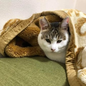 明石市大久保の多頭飼育猫の譲渡を終えて、、、幸せ便り続々 その六
