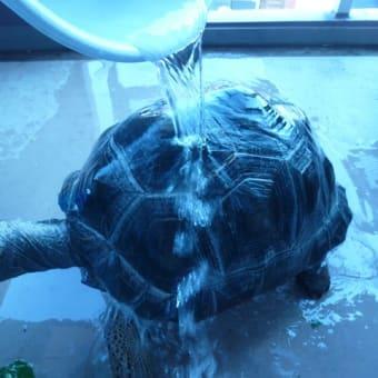 アルダ君に水浴び