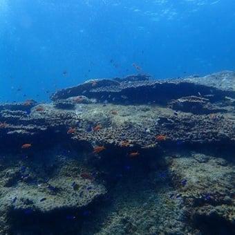 9月26日(日)さすが!柏島でいろんなレア物を見て、熱帯魚が舞う海で遊んできました!