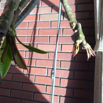 紅葉して散ってそしてまた来年新しい若芽のくりかえし!平凡なようで大切な自然の営み!
