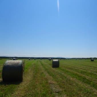 ようやく終わった1番草の刈り取り