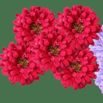 7 / 14 めぐり~自宅の花 ( アスター と ネギ坊主 )  & 友の思い出
