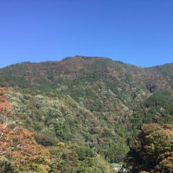 紅葉の季節!色づき始めた箱根宮ノ下周辺♪  | 箱根自然薯の森 山薬