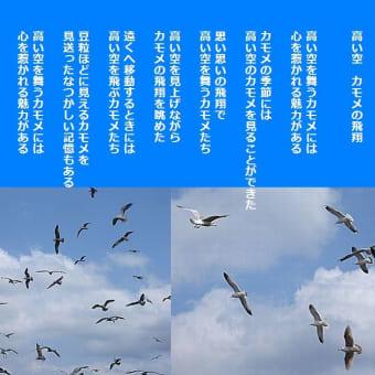 高い空 カモメの飛翔