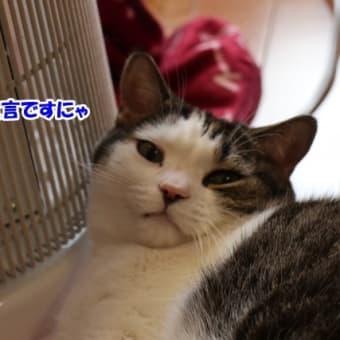 ネコの日バッグ♪