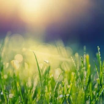 今週もブログ「初夏の景色と私」をアップしていきます