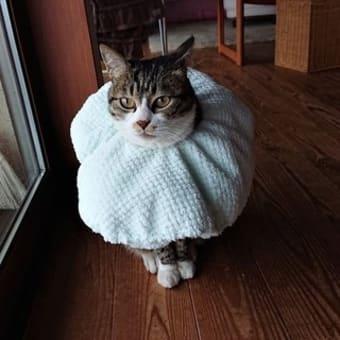 猫さんとの暮らしの工夫