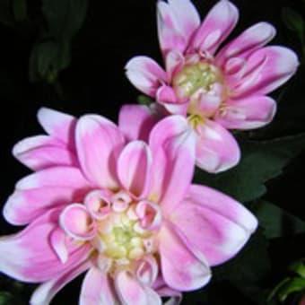 コノ色の花