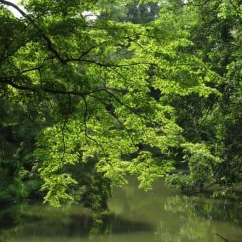 花を愛で、緑で涼を・・~京都府立植物園2020年7月初旬 (2)