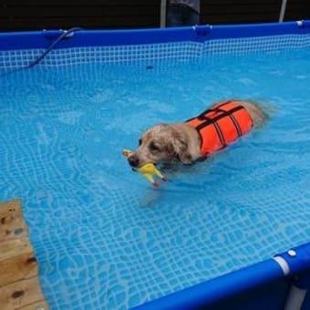 プール開き