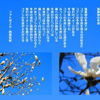 落葉樹の冬芽