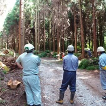 島後地区林業労働安全パトロールを実施しました!