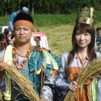 古代米収穫