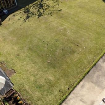 【担当】我が家の芝生【今井】