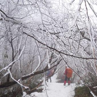 登山で免疫力アップ