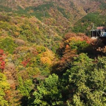 フジテレビ「ぶらぶらサタデー」にて箱根自然薯の森 山薬が紹介されました。
