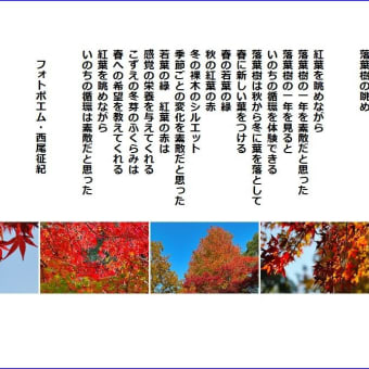 落葉樹の眺め