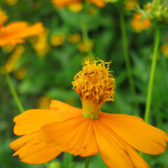 7月の忘れ物(花)