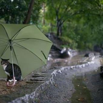 また・・雨