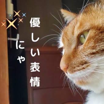 【96】れいにゃん堂のれいちゃん・朝が早いにゃ&商品紹介😸