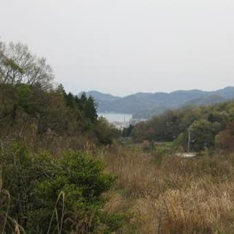 三坂地の山