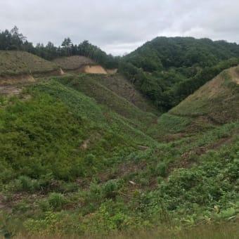 きれいな伐採跡地
