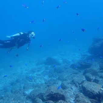 7月24日(土)『愛南!』水温は、上が26度下が22度!海って同じようで同じじゃないんだよねー。だからこそ居る生物もいる。