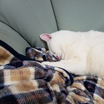 顔がかっゆい痒い、トラブル肌に!&丸い白猫はフミフミしながら寝るの巻~
