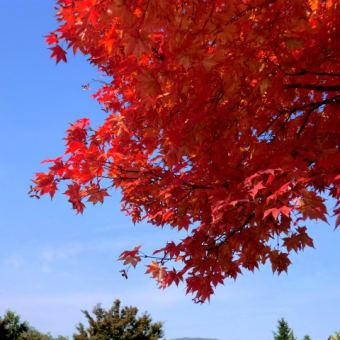 今年初めての紅葉の写真です