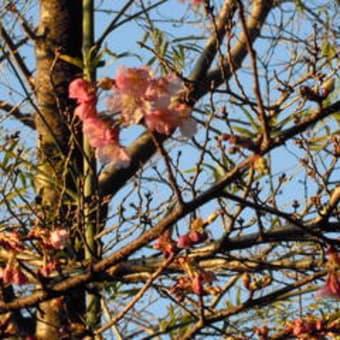 何気ない朝散歩、春はそこまで・・・