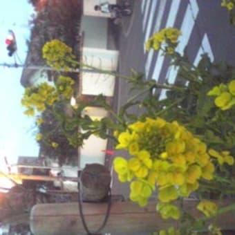 司馬さんの花