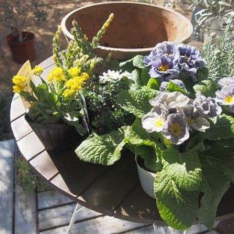 春の寄せ植えを作りました
