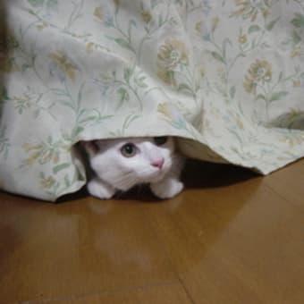 カーテン隠れの術ニャ~