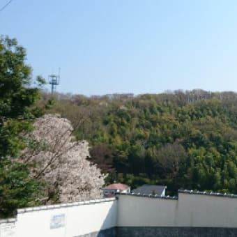 桜満開!ヴォーチェで音楽しましょう!