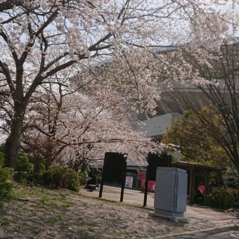 埼玉スタジアムの桜