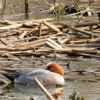トンネウス沼でバードウォッチング 20.04.05