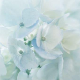 今週もブログ「梅雨の福岡と私」をアップしていきます。