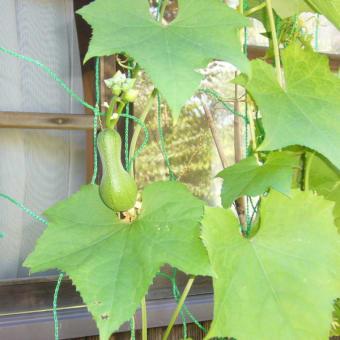 植物・生物観察