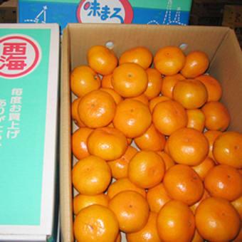 今週のお勧め果物【味まるみかん】