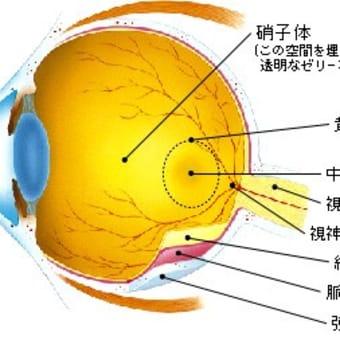 予備軍1200万人ともいわれえている、失明の危険性もある黄斑変性とは・・・その1(目の構造と黄斑の働き)