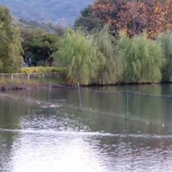 福田公園20191107