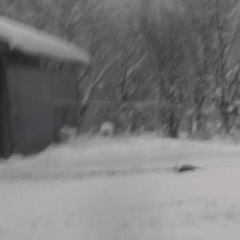 30センチの積雪