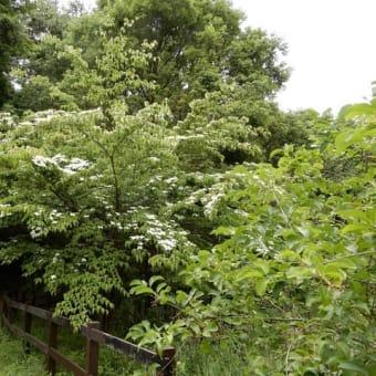 アンデルセン公園の花 その2