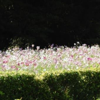 大阪市大の植物園へ