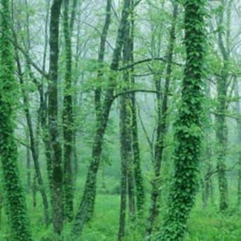 森林ボランテアで夢を達成・・・・