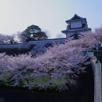 ●石川門 満開のソメイヨシノ