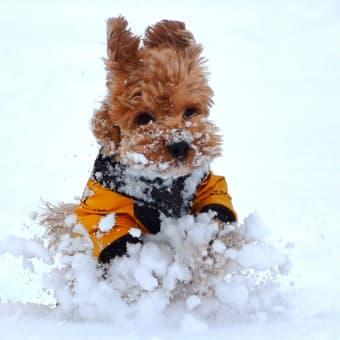 今年の冬は!?